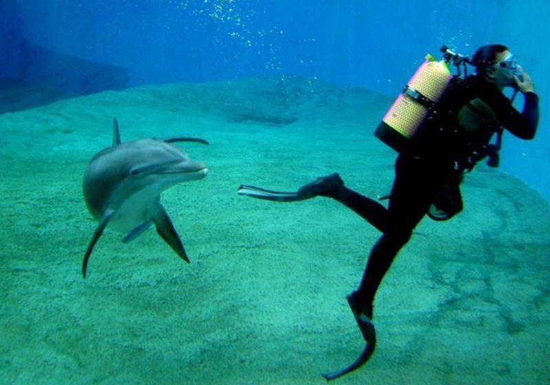 Cours de plongée nancy